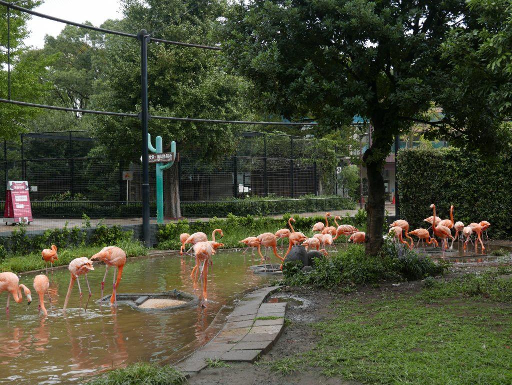 Ueno Zoo